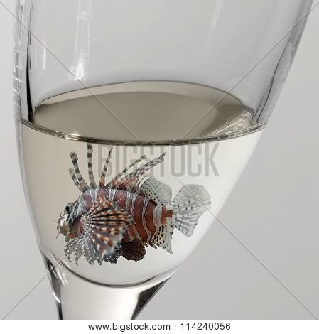 Lionfish And Drinking Glass