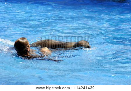 Girl swimming with a sea lion in Miami Seaquarium Florida