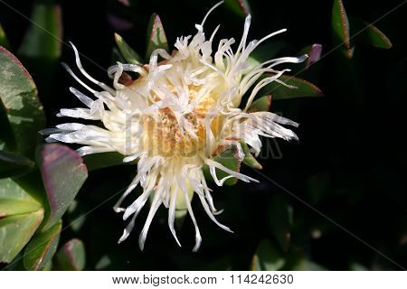 Night Bloomer Flower