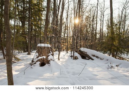 Winter Forest Scene With Stump And Sun Flare