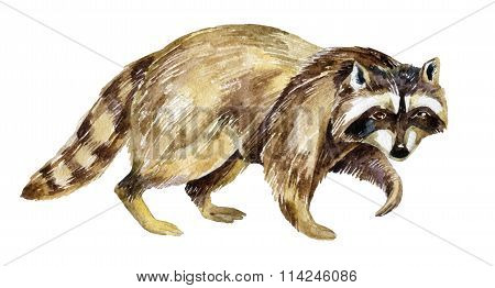 Painting Of Raccoon