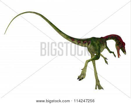 Compsognathus Dinosaur Tail
