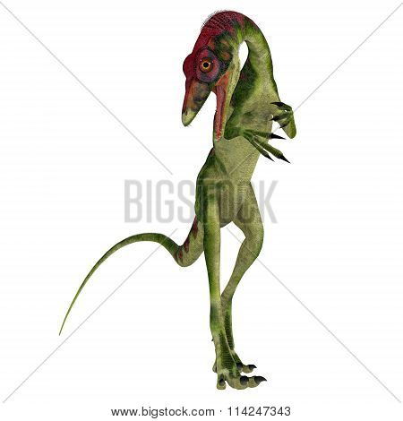 Compsognathus On White