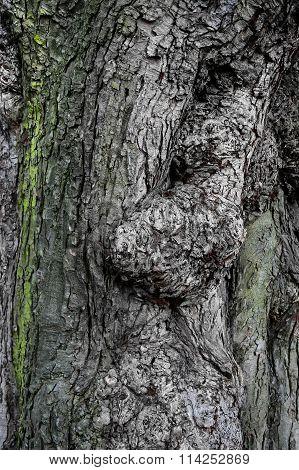 Texture Of Ancient Tree Bark