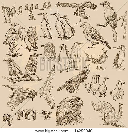 Birds. Line Art Vector. Pack.
