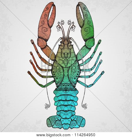Lobster. Hand drawn isolated illustration.