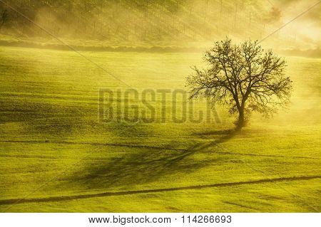 Tuscany Winter  Morning, Lonely Tree And Fog. Italy.
