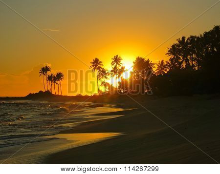 Beautiful orange sunset with black palms silhouettes