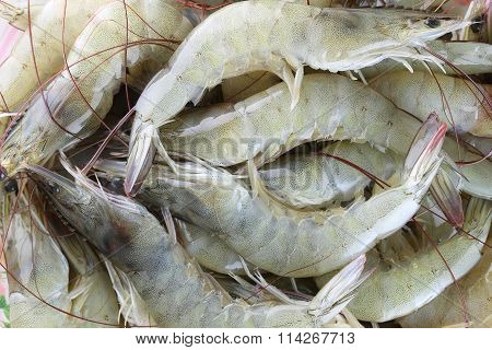 Fresh Raw Shrimp As Garnish In Cooking.