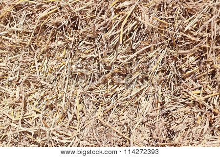 Dry Yellow Golden Straw Texture Of Background.