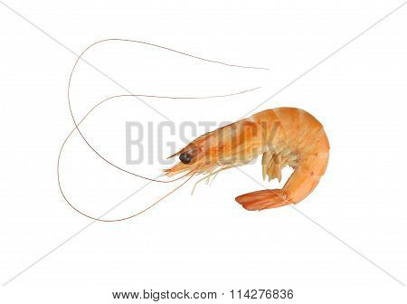 Cooked Shrimp On A White Background.