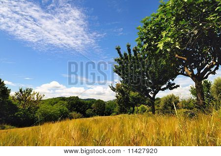 Country field in summer