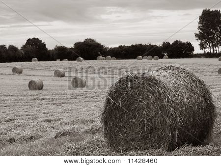 Rolled Haystacks In Kent, England
