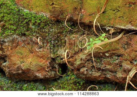 Small Tree With Tree Root And Moss Grow Amidst The Wall.