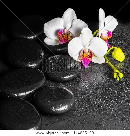 Beautiful Spa Concept Of Blooming White And Red Orchid Flower, Phalaenopsis With Dew On Black Zen St