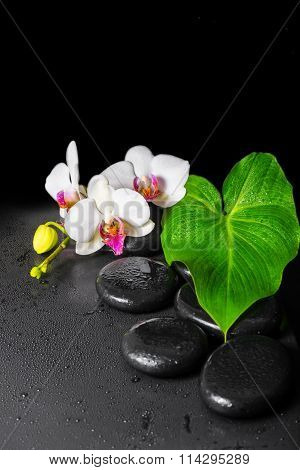 Beautiful Spa Concept Of Blooming White And Red Orchid Flower, Phalaenopsis With Dew And Green Leaf