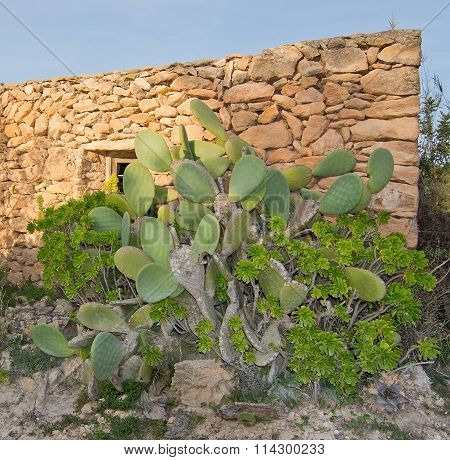 Drystone House Cactus And Yellow Flowers