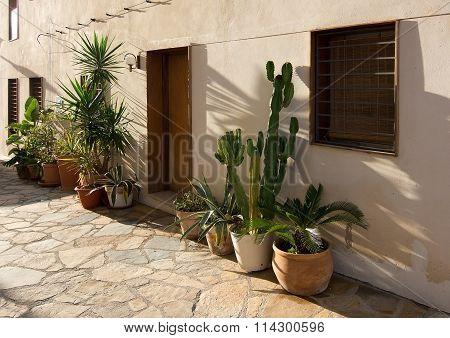 Mediterranean Plants In Terracotta Pots