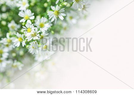 cutter flower