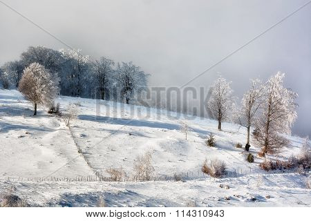 Sunny Day Of A Winter, On Wild Transylvania Hills. Romania. Low Key, Dark Background, Spot Lighting,