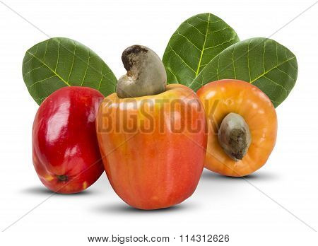 Few Cashew Over A  White Background.