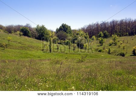 Landscape Of A Green Grassy Valley, Hills With Forest And Sky