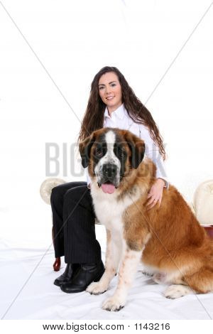 Sitting Pretty Saint Bernard
