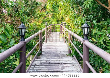 Wooden Walkway In Middle Of Inthanin Trees.