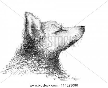 Charcoal sketch of dog muzzle in profile