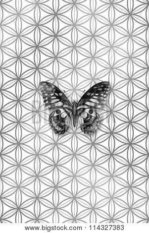 Grayscale Watercolor Butterfly On A Flower Of Life Pattern, Sacred Geometry Symbol.