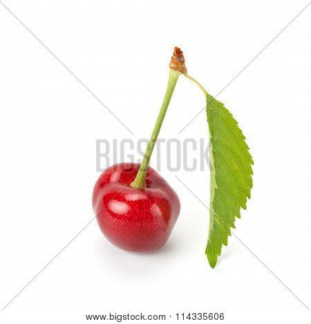 Juicy Ripe Sweet Cherry