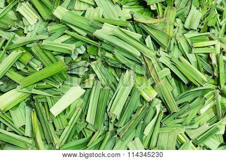 Lemon Grass Dry Leaves
