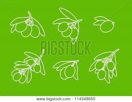 Olives on branch vector set