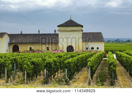 Vineyard In Gironde (bordeaux, Aquitaine)