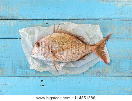 Porgy Fish.