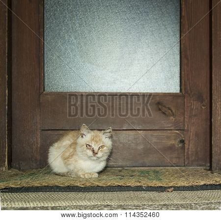 Small Cat Outside
