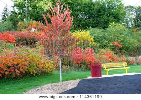 Autumn scene whit colorful foliage in the park