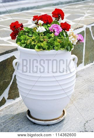 cycladic flower pot with geranium flowers