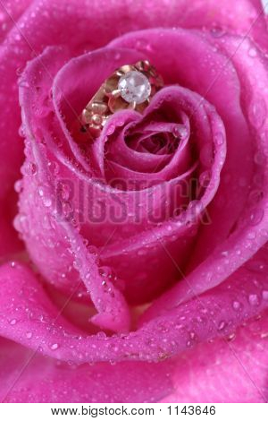 Close Up Of Gold Ring In Pink Rose