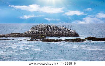 Rocky birds at Pacific ocean coastline in California