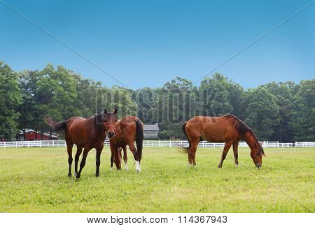 Three bavarian chesnut horses on the farm in the summer time