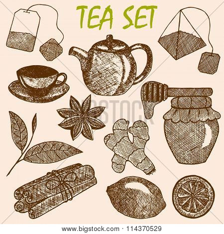 Hand drawn tea culture objects. Teapot lemon cinnamon honey tea leaf ginger tea bag.
