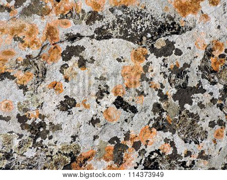 Orange and yellow round lichens