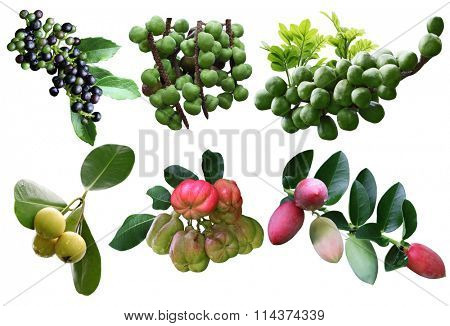 Set of tropical spice fruit isolated on white background