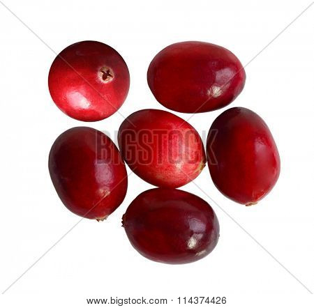 Oval cranberry fruits isolated on white background