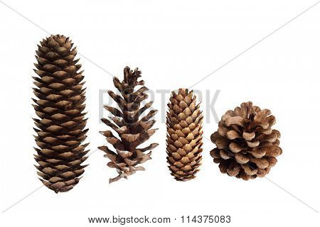 Collection of pine cones isolated on white background