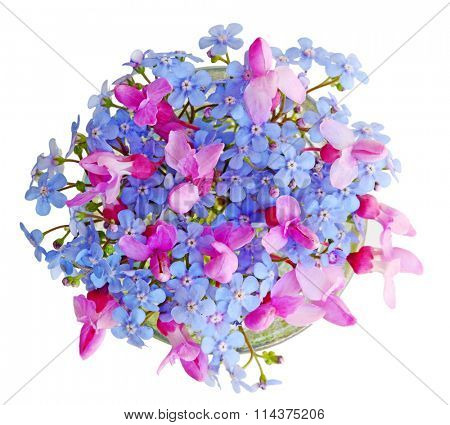 Forget me not and redbud blossom isolated on white background