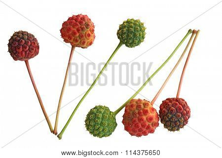 Cornus Kousa Dogwood Fruits isolated on white background