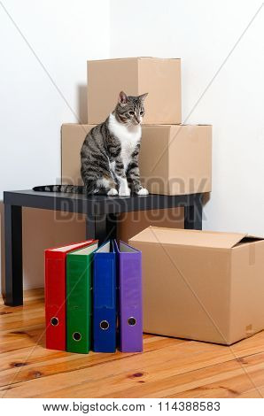 Moving Day - Cat And Cardboard Boxes In Room