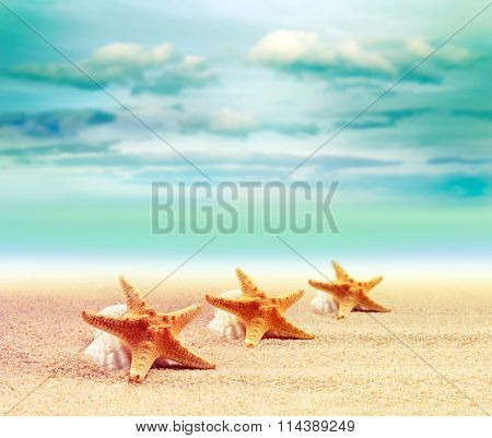 Shell and starfish on sandy beach